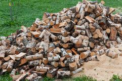 Birch wood . Royalty Free Stock Photography