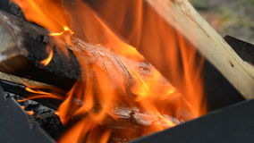 Birch wood burning in a brazier Stock Images