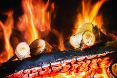 Birch wood burning in the fireplace or bonfire Stock Photos