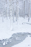 Birch wood forest covered in snow Stock Photo