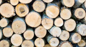 Birch wood. Fuel for furnaces piled in rows Royalty Free Stock Photo