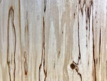 Birch wood grain Royalty Free Stock Photography