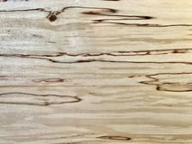 Birch wood grain details Stock Image