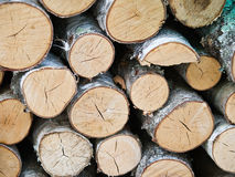 Birch wood logs wallpaper Royalty Free Stock Photography