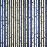 Birch wood pattern Stock Photo