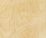Free Birch Wood Texture Royalty Free Stock Photo - 22453505
