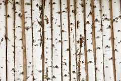 Birch wood texture Stock Photography