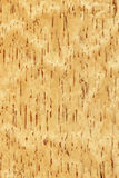 Birch (wood texture) Royalty Free Stock Photo