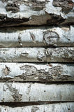 Birch wooden background, trunks with bark Royalty Free Stock Image