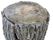 Birch wooden log isolated on white royalty free stock photography