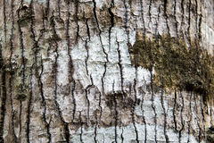Birchbark Stock Photos
