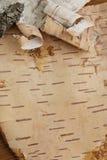 birchen kork royaltyfri foto