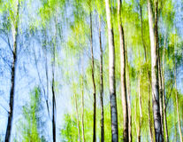 Birches abstract in spring colors. Birches in spring colors against a light blue sky in blurred panning motion. Abstract nature royalty free illustration
