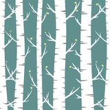 Birches Stock Photography