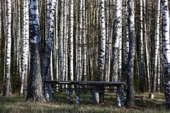 Among birches. Royalty Free Stock Photo