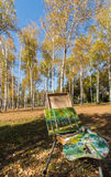 Birches in the drawing board. Northeast China changchun south lake park of birches, when autumn came to the whole of birches became a golden world, many painters Royalty Free Stock Photo