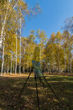 Birches in the drawing board. Northeast China changchun south lake park of birches, when autumn came to the whole of birches became a golden world, many painters Royalty Free Stock Images