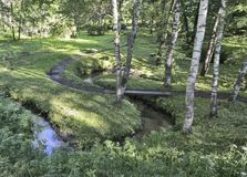 A meandering stream in the middle of a birch forest stock photos