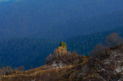 Birches on high altitudes. Forest below. Caucasus, Russia Stock Photography