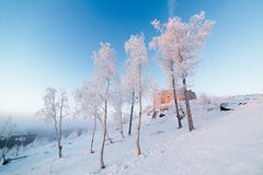 Birches in hoarfrost, morning, frosty dawn in the Arctic tundra. Royalty Free Stock Photos