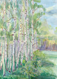 Birches in May Stock Image