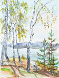 Birches near river Stock Image