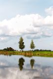 Birches at pond. Stock Photography