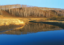 Birches reflected in the blue surface of the water Stock Photo