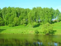 Birches on the river royalty free stock photo