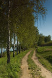 Birches and road Stock Photo
