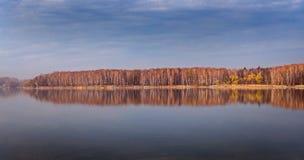 Birches on the shore of goczałkowicki lake, poland stock photo