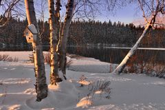 Birches in snow
