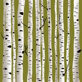 Birches in vector Royalty Free Stock Photography