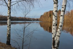 Birches and water mirror Stock Photos