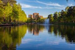 Birchs和池塘 可以 免版税库存照片