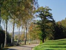 Birchs da paisagem do campo das árvores imagem de stock