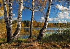 Birchs en vijver Stock Afbeeldingen