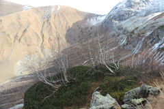 Birchs sulla cima Montagne di Caucaso Fotografie Stock