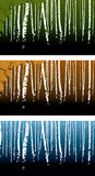 Birchwood. Vector background with a birch grove Royalty Free Stock Photos