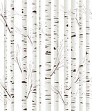 Birchwood background Royalty Free Stock Photo