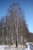Birchwood in inverno Immagine Stock