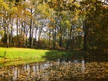 Birchwood sjö- och höstsidor Molnfri dag i Oktober royaltyfria bilder