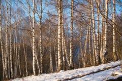 Birchwood Stock Photos