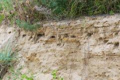 Bird& x27; гнездо s в отверстии на стене утеса оползня на морском побережье Азова Стоковое Фото