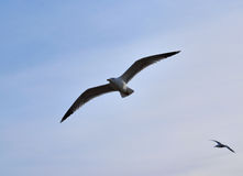 Bird& x27; муха s Стоковые Фото