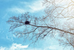 Bird& x27; 反对天空的s巢在光秃的树 免版税库存照片