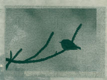 Bird. Simple mixed medium image of a little sparrow silhouette sitting on a Pine tree Stock Photos