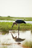 Bird-11 Stock Images