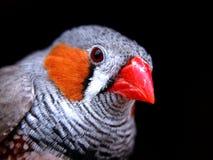 Bird. My bird royalty free stock images