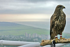 Bird. Proud bird in the mountain district of Abkhazia Stock Photos